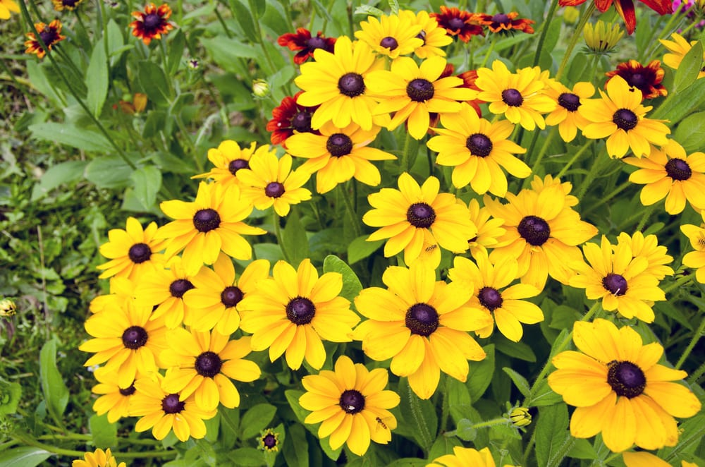 the best plants for your spring garden holbrook life